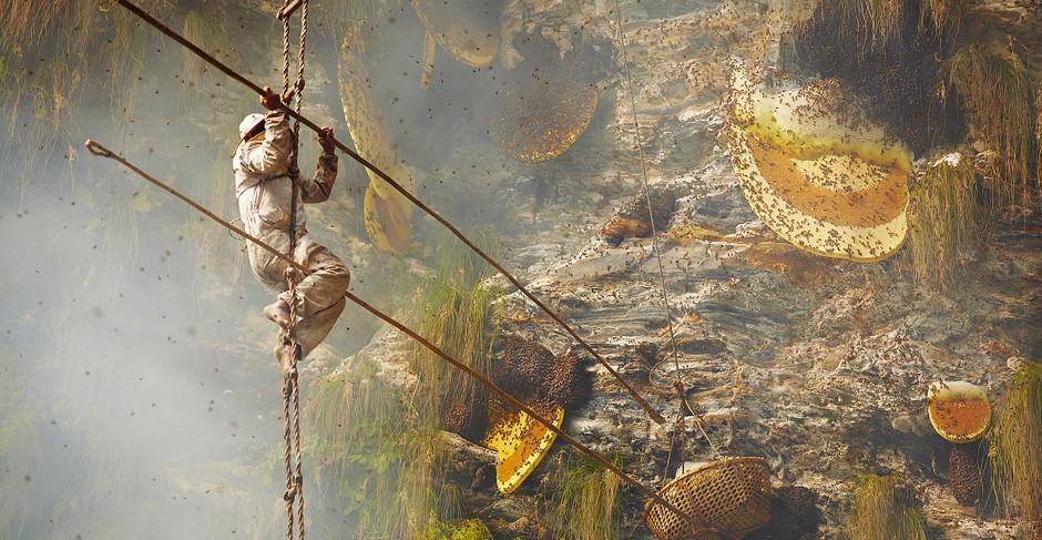 Honey Hunting in Nepal